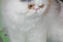 Kitties / by Kathy Moynan