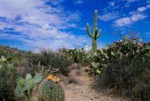 desert scenes / by Jennifer Zimmerman