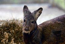 Rare Animal Sightings / by Ramona Powell