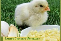My future chickens / by Kelly Matkin