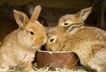 Just Rabbits / by Fiber Friends | Pocket Pause