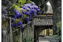 gardens and out door things / by Anna Robertson Brimhall