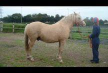 { horse training } / by Erin Davis