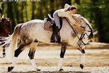 I<3Horses / Horses / by Brett Hansen