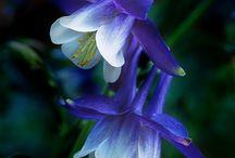 Flowers  / by Teressa moerike