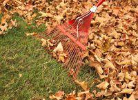 Gardening - Fall Garden & Prep for Next Year / by Barbara Byrd