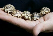 animals in miniature / by Amanda McCloskey