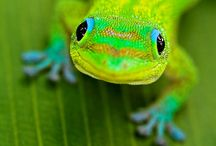Amazing Creatures ~ Lizards, Frogs, Snakes & Turtles / by SE Ⓥ Grl