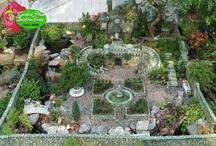 fairy gardens / by Connie Greene
