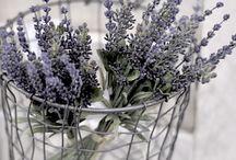 Lavender / by Kathy Dietkus