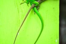3 / Verde / by Elisa