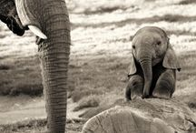 Animals / by Susan Spaulding