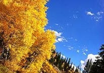 That Crisp Mountain Air  / Have you ever seen the aspens turn orange in Colorado? If not, add it to your bucket list, it's unbelievably beautiful  / by Vista Verde Ranch