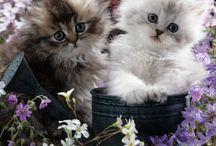 Kitty Kitty♥ / by Melisa Medina