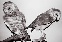 Owls / by Jen Ingram