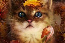 Felines / by Jennifer Maulsby