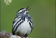 Birds...Chirp! / by DeBi O'Campo