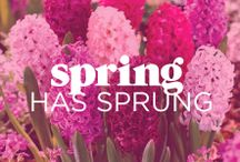 Spring has Sprung! / Spring Inspiration! Spring is here and the weather is warming up - Could it be time to spring clean your Lingerie drawer? / by Bras N Things