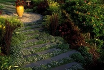 Creative Landscaping / by Tepe Landscaping