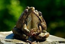 Frogs / Frogs / by Clara Mecum