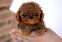 cute animals / by Katherine Eboch