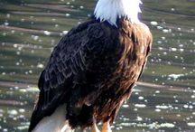 Bar Harbor Wildlife / by Harborside Bar Harbor