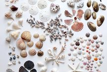 Displays and Collections / Things organized neatly and sometimes not so neatly / by Laura Pike-Seeley