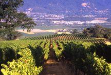 Vineyard Visions / by Rodney Strong Vineyards