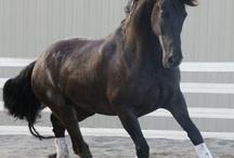 Cavallo / by Kai Livramento