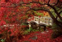 Foliage / by Stacy Talcott Hutchinson