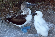 Galapagos Islands / Wildlife we saw on our trip to the Galapagos with kids / by Travel for Kids