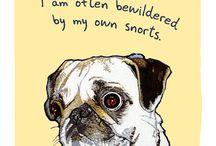 Pug Love / All things Pug related! Midas inspired board / by Pamela Wright