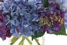 Flowers / by Debbie Weygand DelaGarza