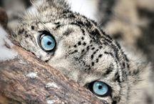 Eye Eye Eye / by Wilbur Hot Springs