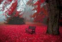 Autumn / by Cristi Kwei
