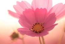 Pink Delight / by Judy Duncan