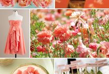 Rainbow of Colors-Coral Inspiration / by Nancy Smith