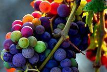 Color / by Patrizia Regina