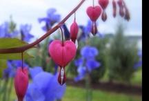 flowers / by Maddie Krotec
