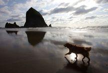 >>west coast<< / by salowi