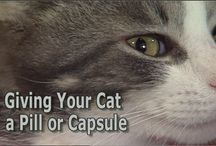 Important Things We Think You Should Know / by Exclusively Cats Veterinary Hospital