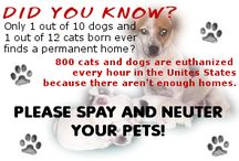 Spay/Neuter / by Animal Alliance