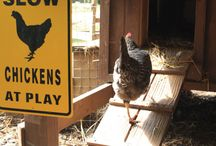 I want chickens again / by Marisa Cline