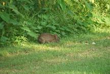 Rabbit Hunting / by Amanda Munhollon