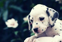OHMYGOODNESS Puppies. / by Grace Zoller
