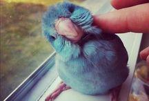 Cute!  / by Ashley Crissinger