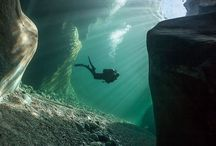 Divers / by Abbey Bognar