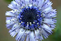 Flora (blues and purples) / by Karen Berryman
