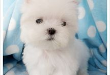 Puppies / by Kenzie Dothsuk