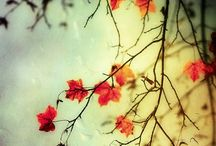 Finally Fall~ / Enfin l'automne / by Luann Clauson